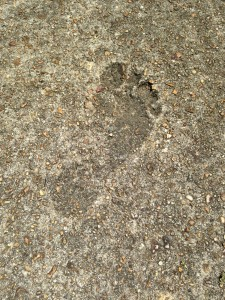 Footprint in the sidewalk on the side of my house